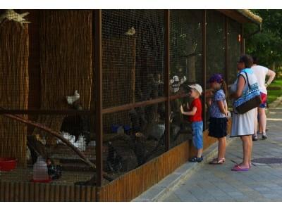 Пансионат  Фея-3 Анапа | Развлечения для детей